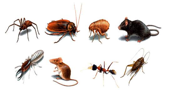 Thuốc diệt côn trùng nào diệt mối mọt tốt?