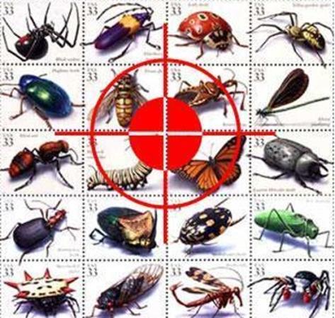 Thuốc diệt côn trùng của Anh là loại nào?