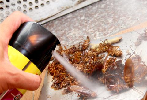 Công ty cung cấp thuốc diệt côn trùng tại Đăk Lăk