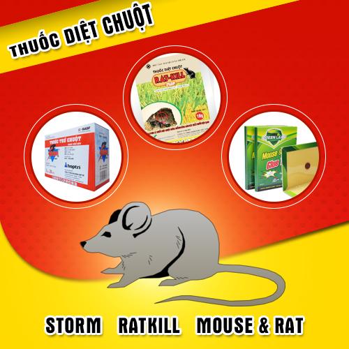 Hãy chủ động diệt chuột ngay từ lúc phát hiện